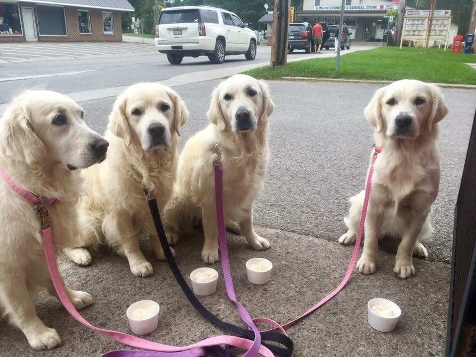 Dogs having ice cream in Apsley