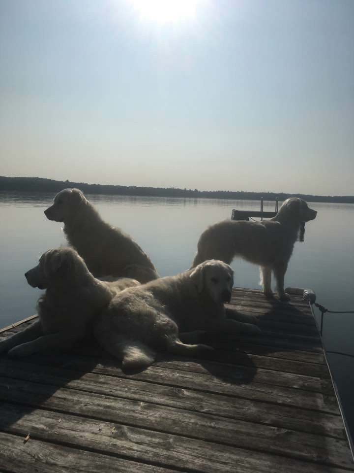 all dogs on dock