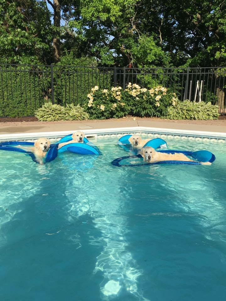 dogs on floats in pool