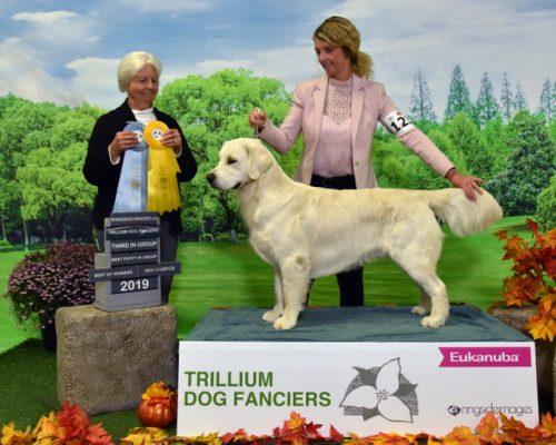Jaxon awarded, Group, Best of Breed from puppy class under Breeder Judge Gloria Kerr, October 2019